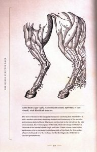 The Art of Animal Anatomy internal 1