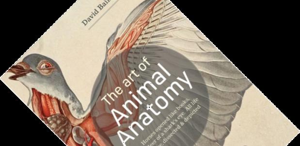 The Art of Animal Anatomy