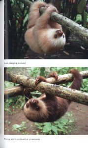 sloths internal 2
