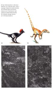 The Dinosaurs Rediscovered internal 2