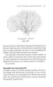 Fungipedia internal 4