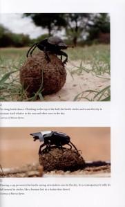 Dance of the Dung Beetles internal 1