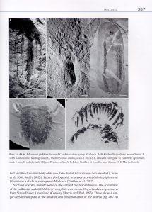 The Invertebrate Tree of Life internal 4