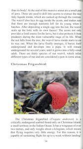 A Book of Rather Strange Animals internal 1
