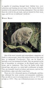 A Book of Rather Strange Animals internal 4