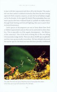The Secret Life of Flies internal 2