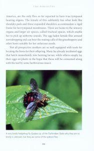 The Secret Life of Flies internal 4