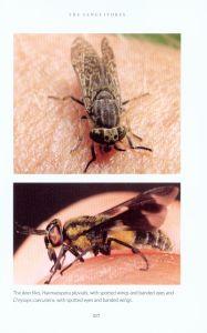 The Secret Life of Flies internal 5