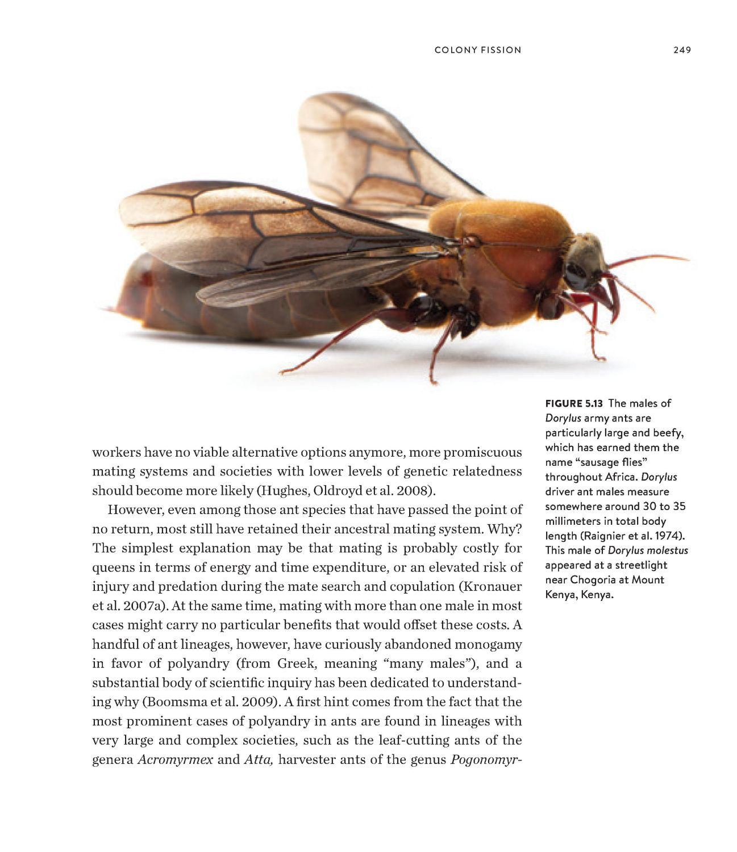 Army Ants internal 6