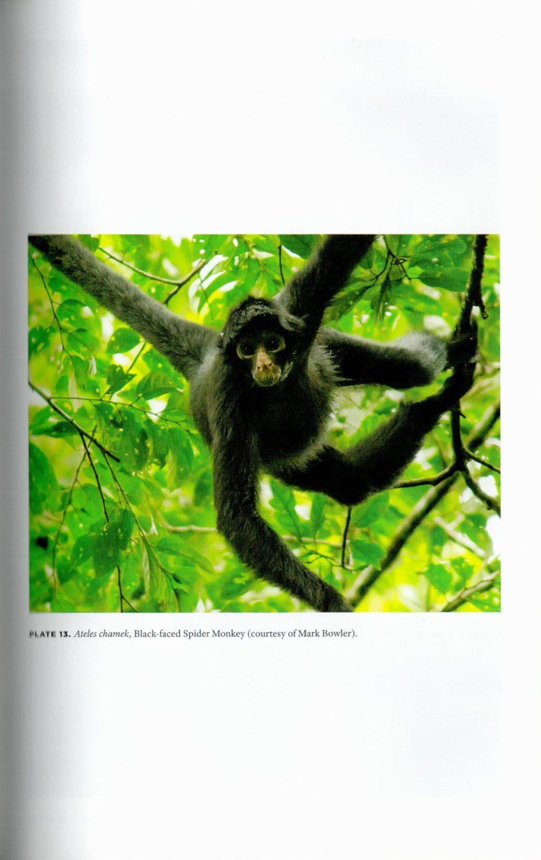 New World Monkeys internal 4