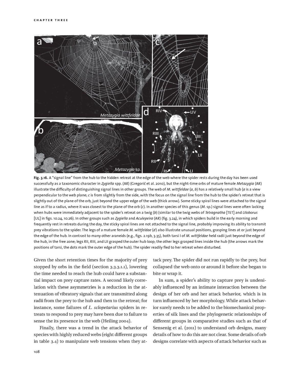 Spider Webs internal 3