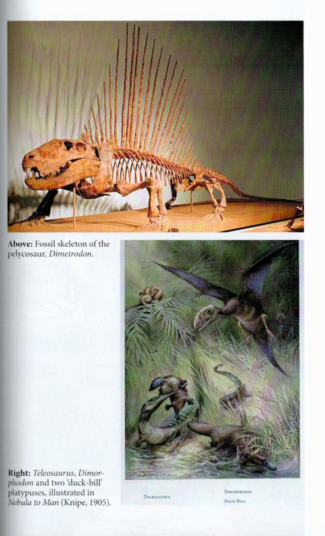 Beasts Before Us internal 3